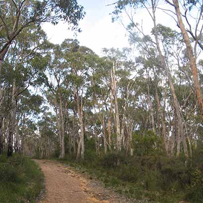 Skink Trail, Mark Oliphant Conservation Park