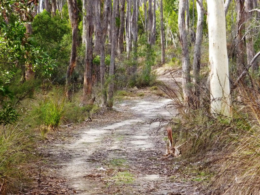 Vision for the establishment of Adelaide100 walking trail