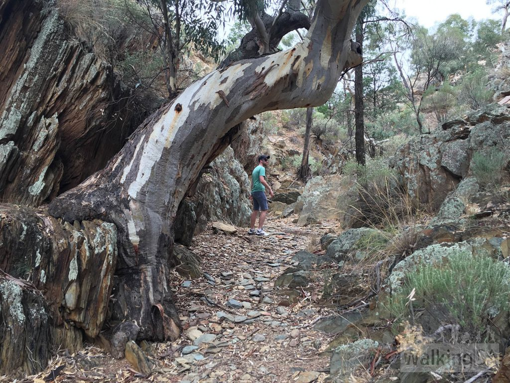 Hiking along the Hidden Valley creek in Bendleby Ranges