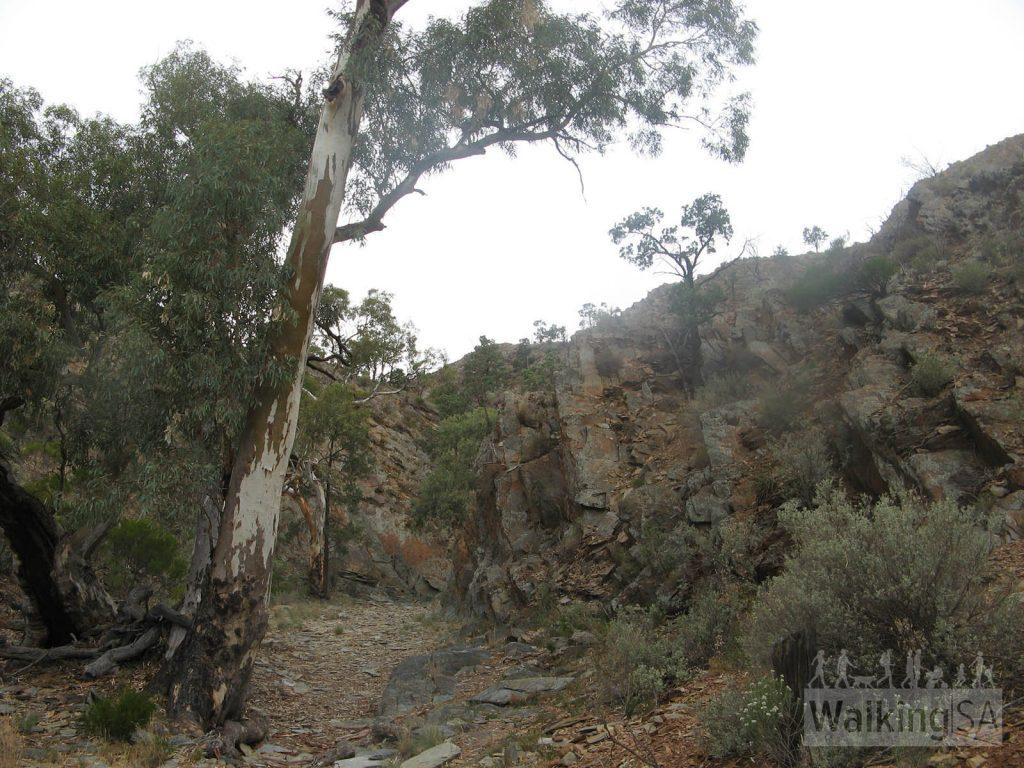 Hiking along the Hidden Valley creek