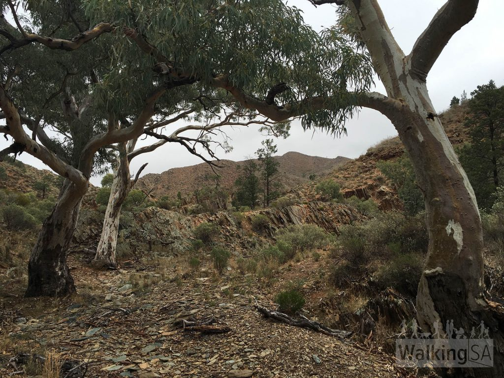Bendleby Ranges – 4 Bushwalks