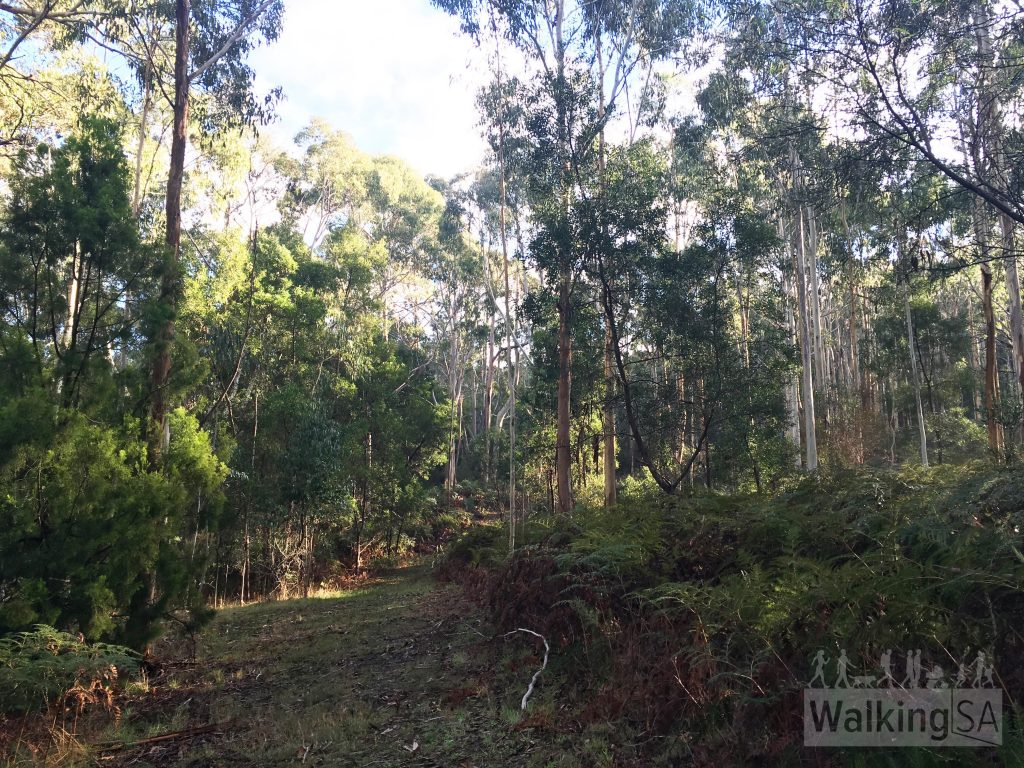 Walking along the grassy fire track, Ridge Trail hike