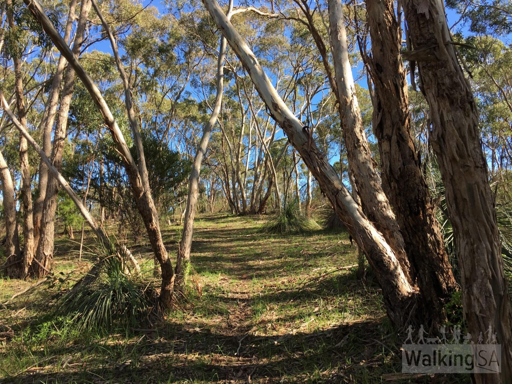 Good trail walking through the woodlands