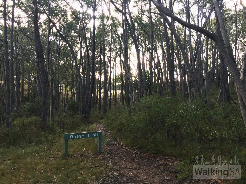 When you reach the Ridge Trail sign, follow the walking trail (fire track ends here)