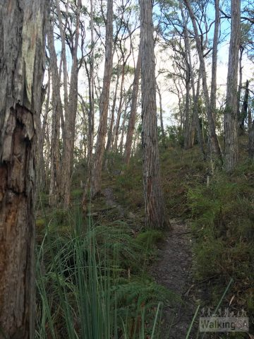 Hiking along the walking trail up to the Mt George summit.