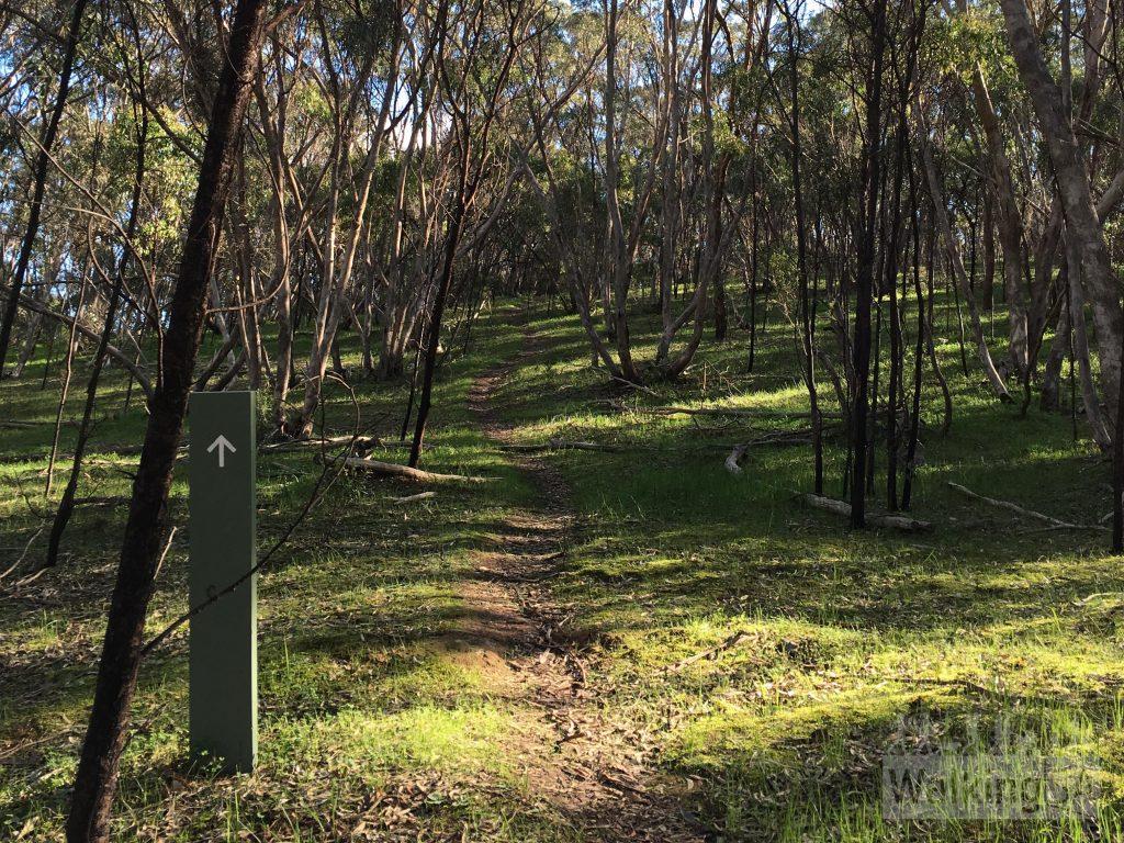Walking through woodlands