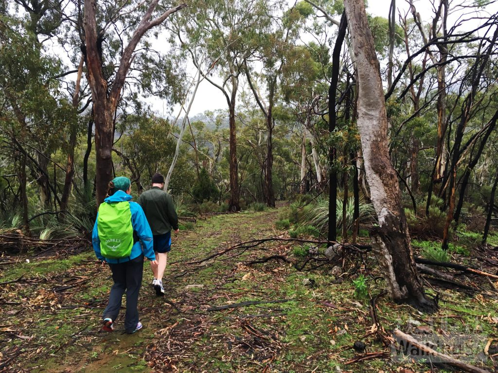 Walking in Montacute Conservation Park