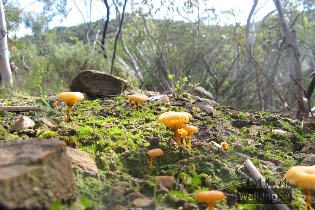 Boat Harbor Hike fungi