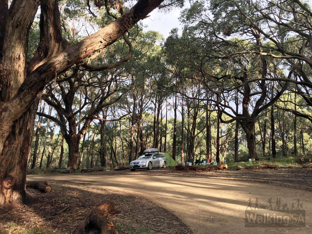 Camping at Stringbark campsite, Deep Creek Conservation Park