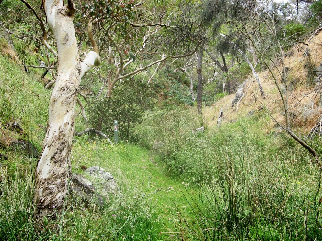 Following the Heysen Trail on the Aaron Creek Circuit Hike