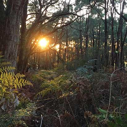 Forest Circuit Walk, Stringybark Campsite, Deep Creek