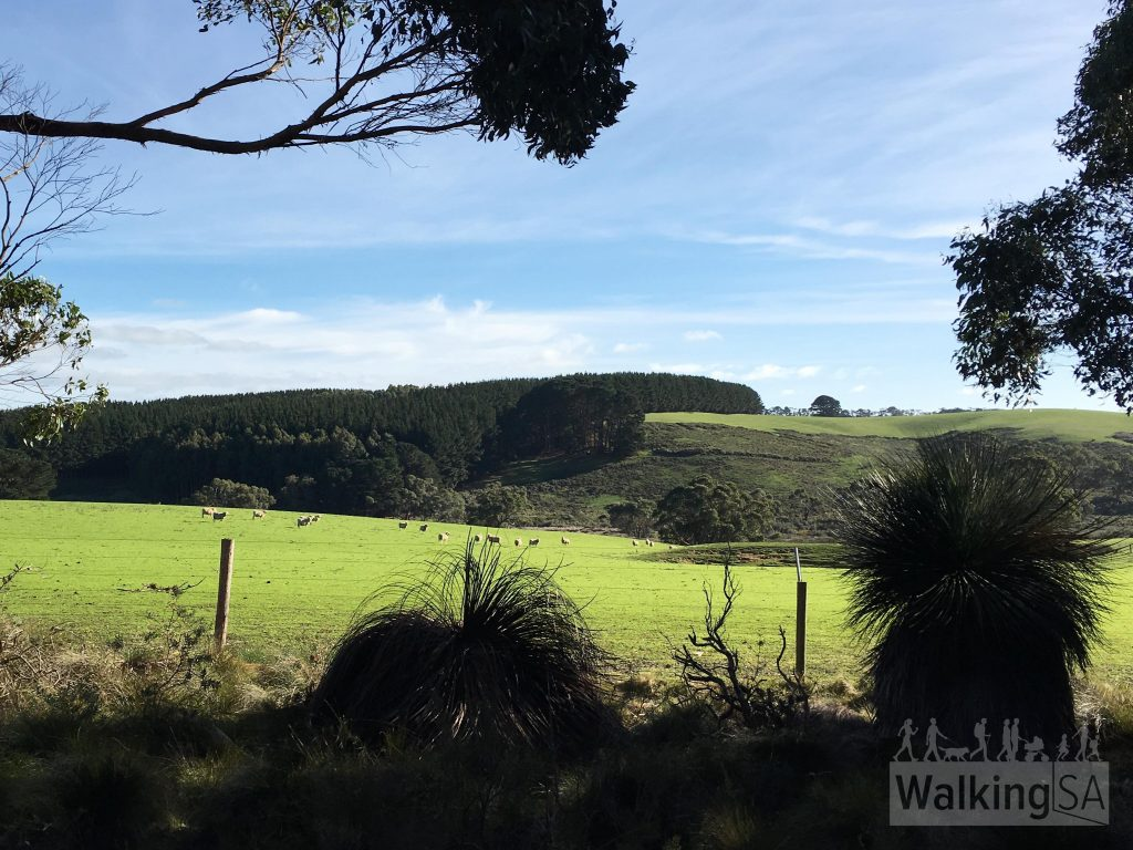 Glimpses of farmland on the Spring Wildflower Walk