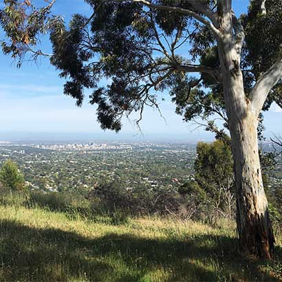 Greenhill Recreation Park and Chambers Gully