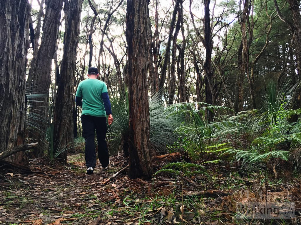 Hiking the Forest Circuit Walk