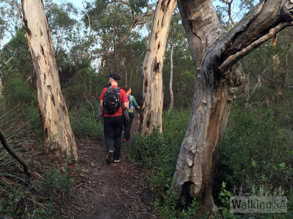 Walking through forest on the Deep Creek Waterfall Hike from Tapanappa Lookout
