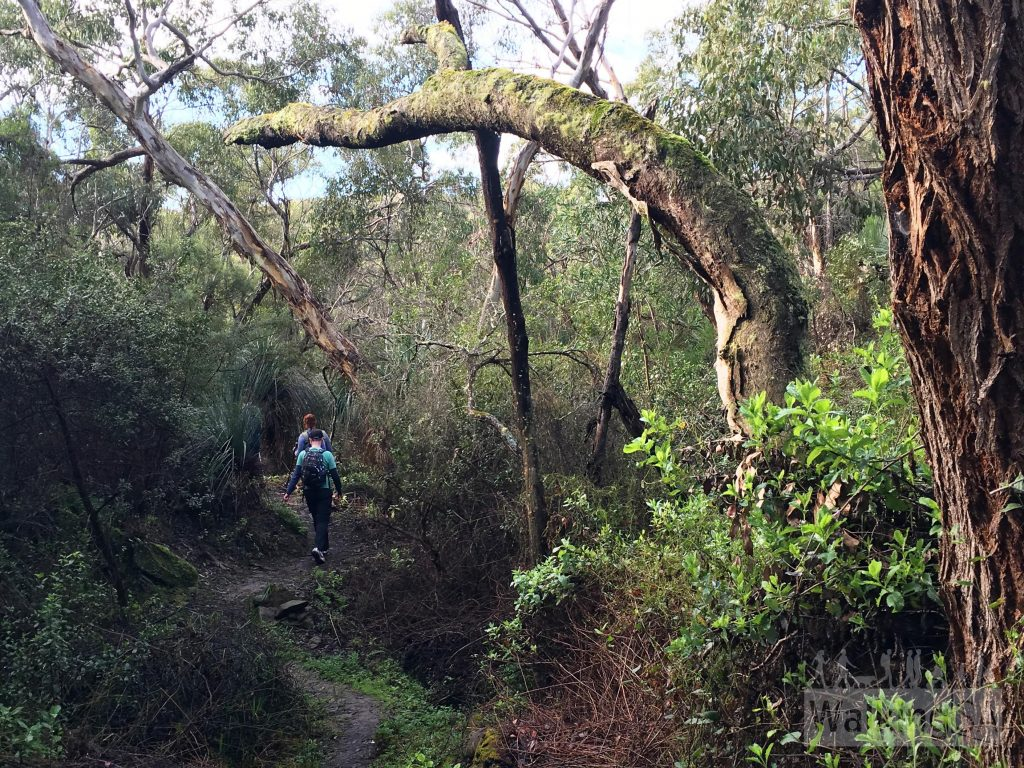 Hiking through moist forest on the Boat Harbor Hike