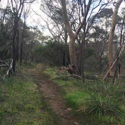 Walking Trail Around Mount Barker Summit