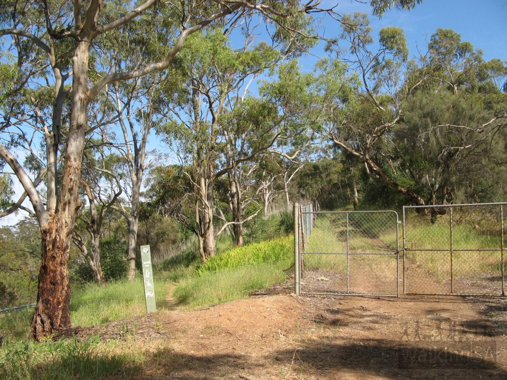 The walking trail meets the original fenced off track again near Greenhill Road