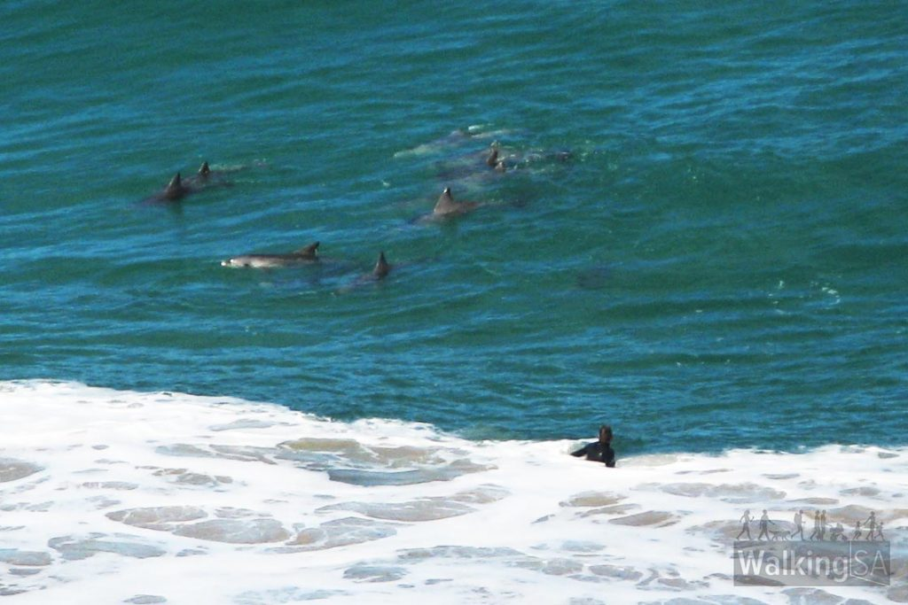 Views of dolphins and surfers from lookout above Boat Harbor