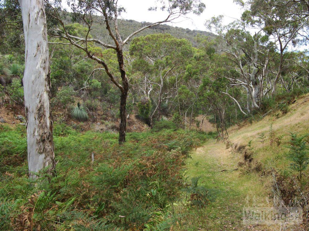 Walking along the Heysen Trail on the Aaron Creek Circuit Hike
