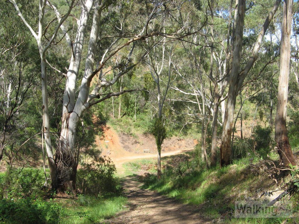 Walking down the Chambers Gully Track
