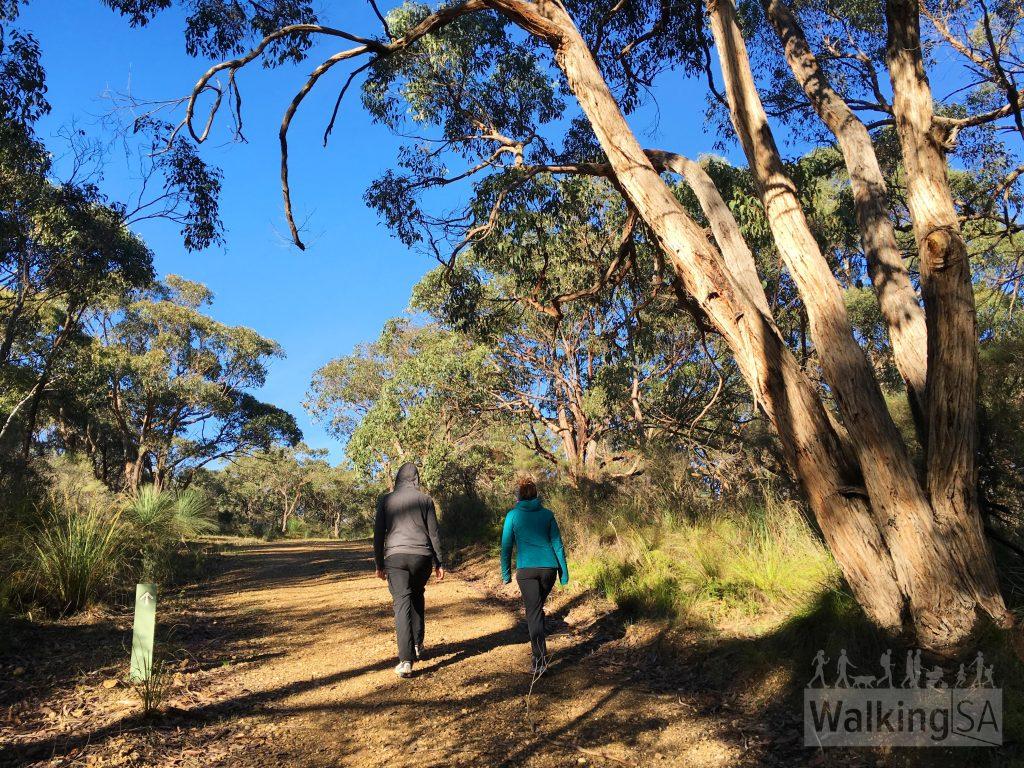 Walking on the Spring Wildflower Walk