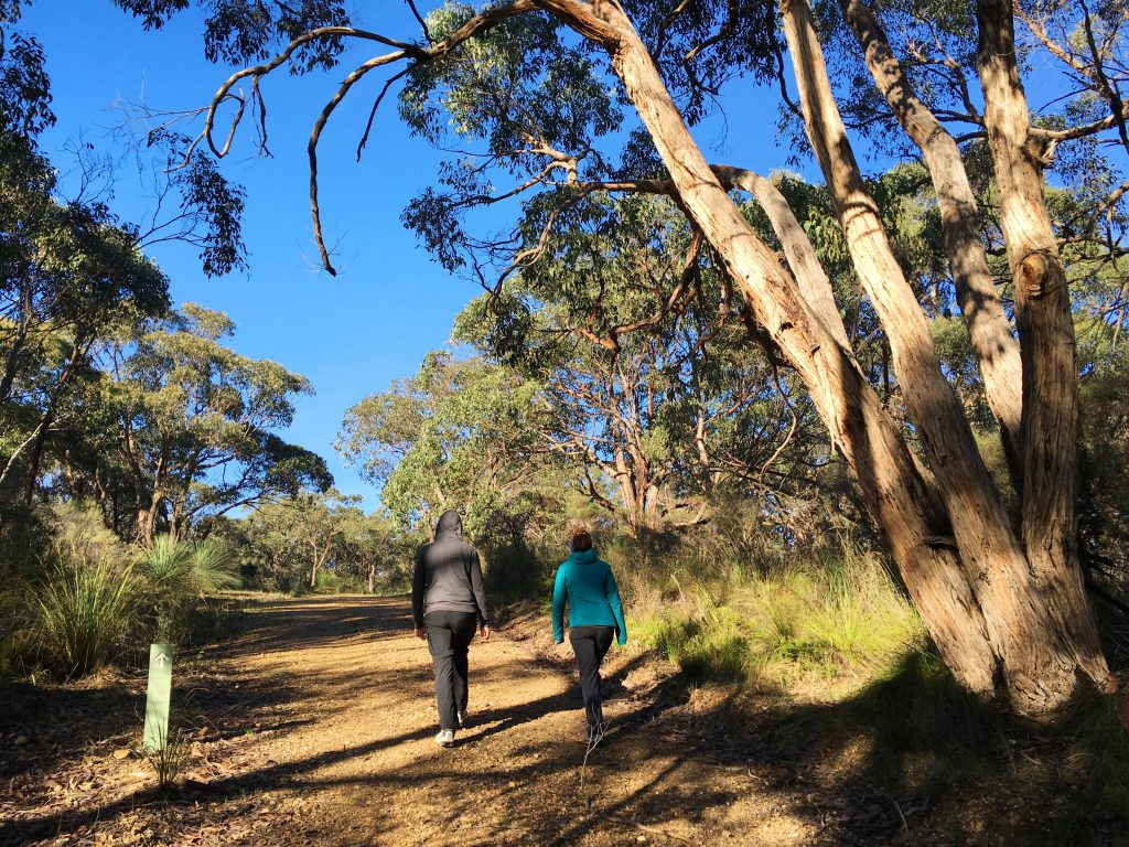 Spring Wildflower Walk, Stringybark Campsite, Deep Creek