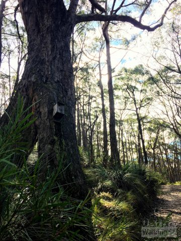 Birdboxes in Kenneth Stirling Conservation Park (Filsell Hill)