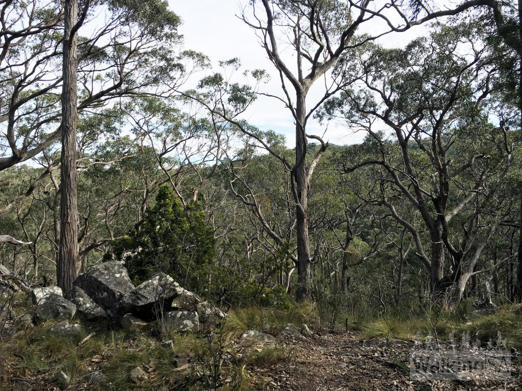 Forest views on Proberts Track