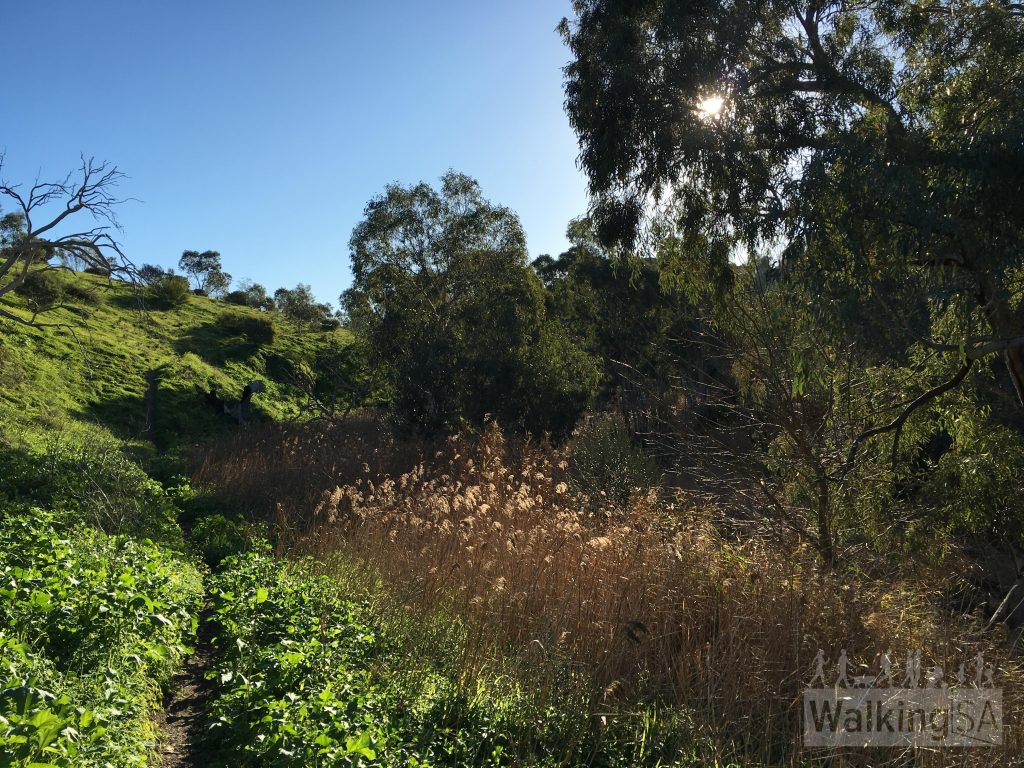 Hiking along the river trail on the Old Noarlunga Hike