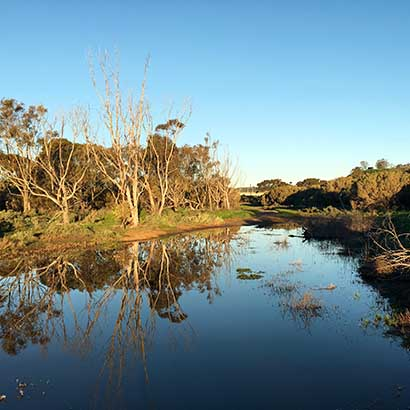 Pingle Farm Trail via estuary, Onkaparinga River Recreation Park