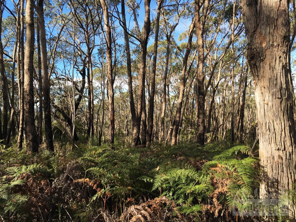 Some of the forest have dense understory like this, other areas are more open