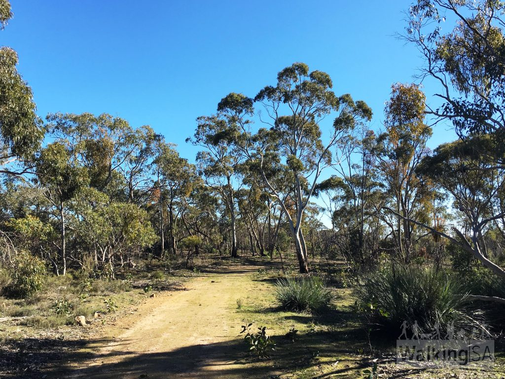 The Wirra Loop Hike is a gentle wander along fire tracks through the flatter areas of the park