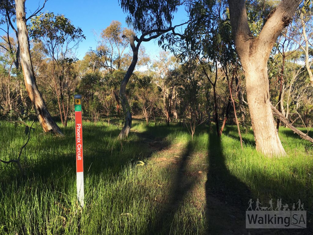 "The trails in the northern section of Para Wirra, the Barossa Goldfields, are well marked thanks to the <a href=""https://www.walkingtrailssupportgroup.org.au/"">Walking Trails Support Group</a>"