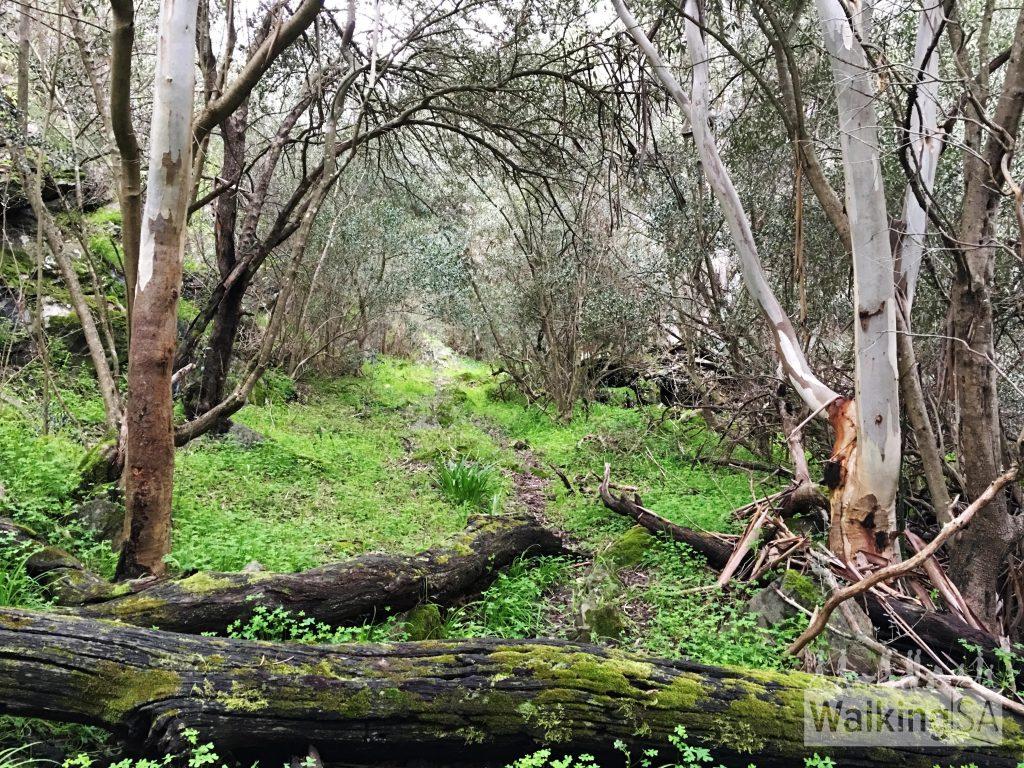 Tatendi Hike, Onkaparinga Gorge (3 Walk Options)