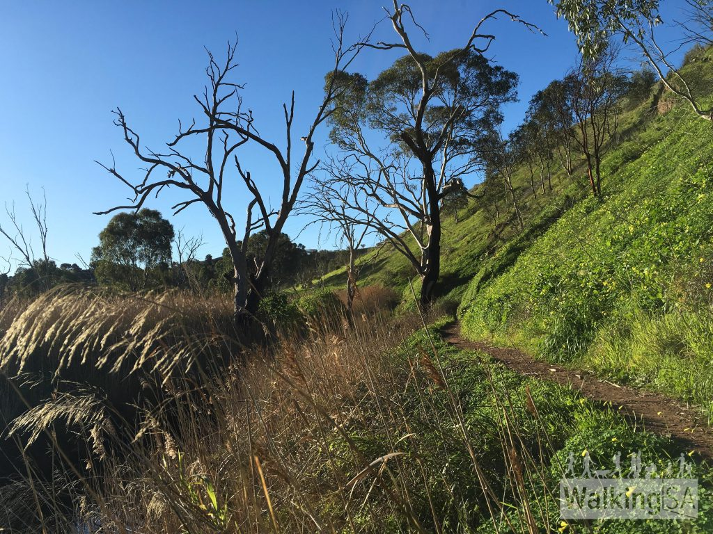 The walking trail along the Onkaparinga River on the Old Noarlunga Hike