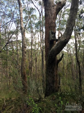There are many birdboxes throughout the park, installed by Rotary from Munno Para
