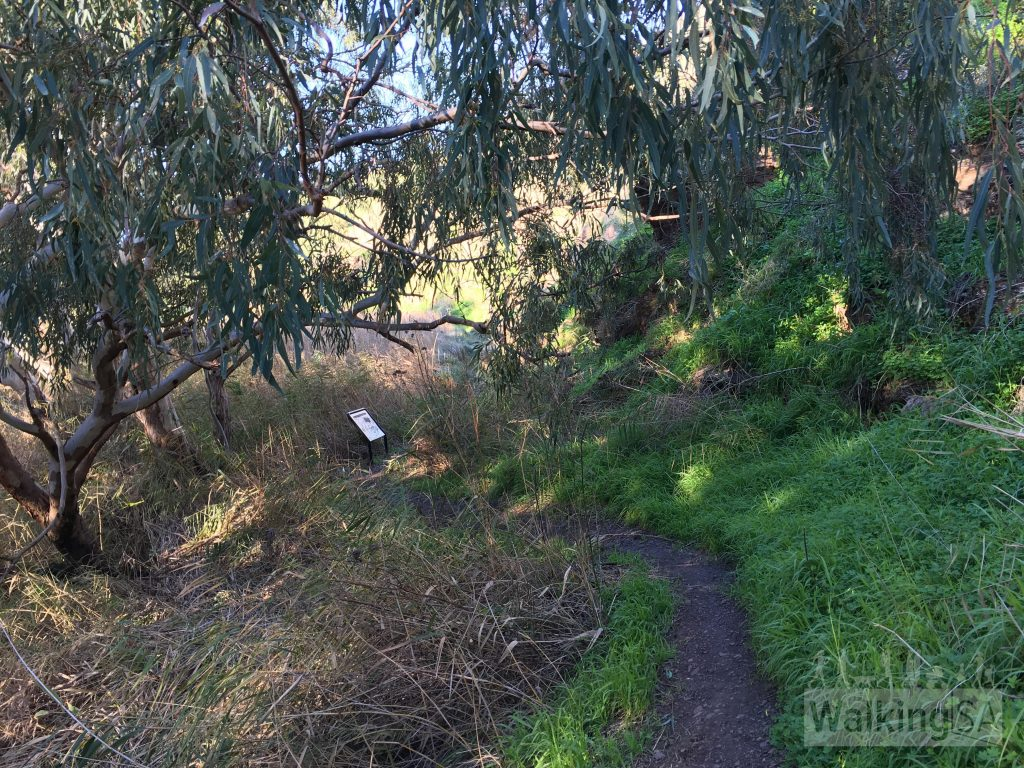Walking along the river trail on the Old Noarlunga Hike