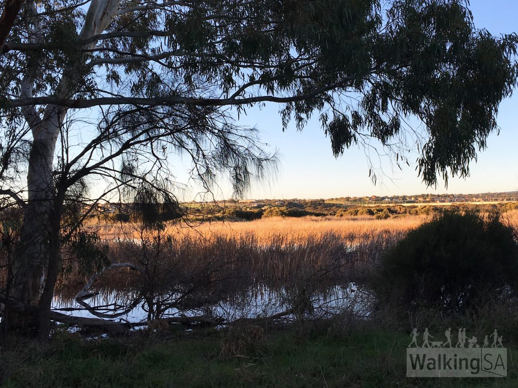 Wetlands on the Onkaparinga River beside the Pingle Farm Trail