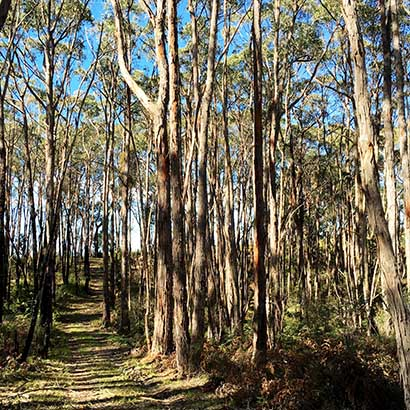 Wottons Scrub (Kenneth Stirling Conservation Park)