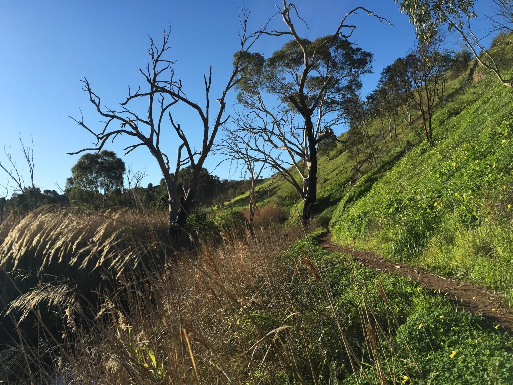 Old Noarlunga Hike, Onkaparinga River National Park