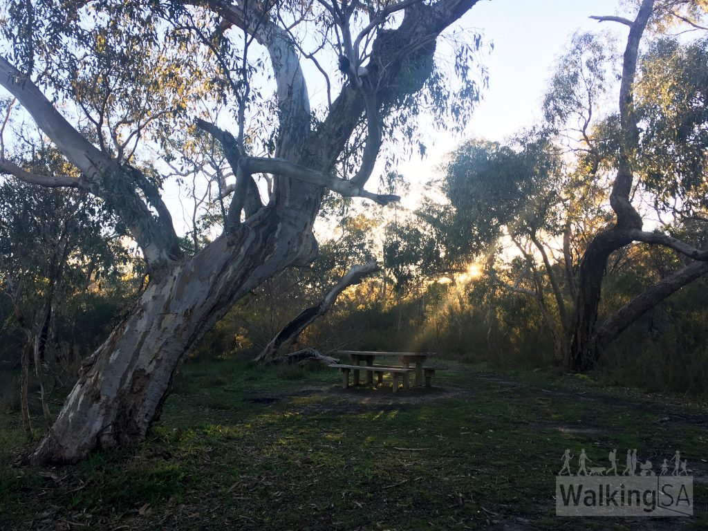 Picnic area at the trailhead of the Jenkins Scrub Walking Trail in Mt Crawford Forest