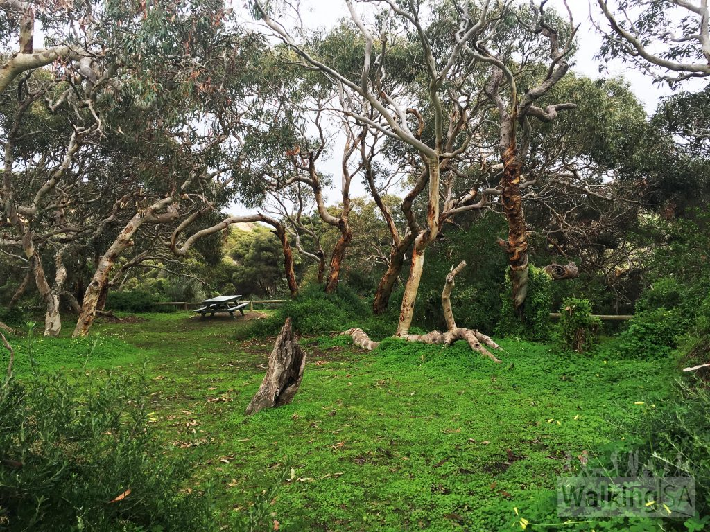 Picnic area beside Dennis Hut at Waitpinga Campground