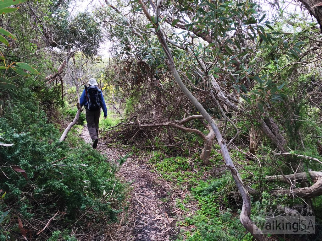 Plenty of pleasant scrub to walk through on the Heysen Trail, between the end of the Coastal Cliffs Walking Trail and Kings Beach