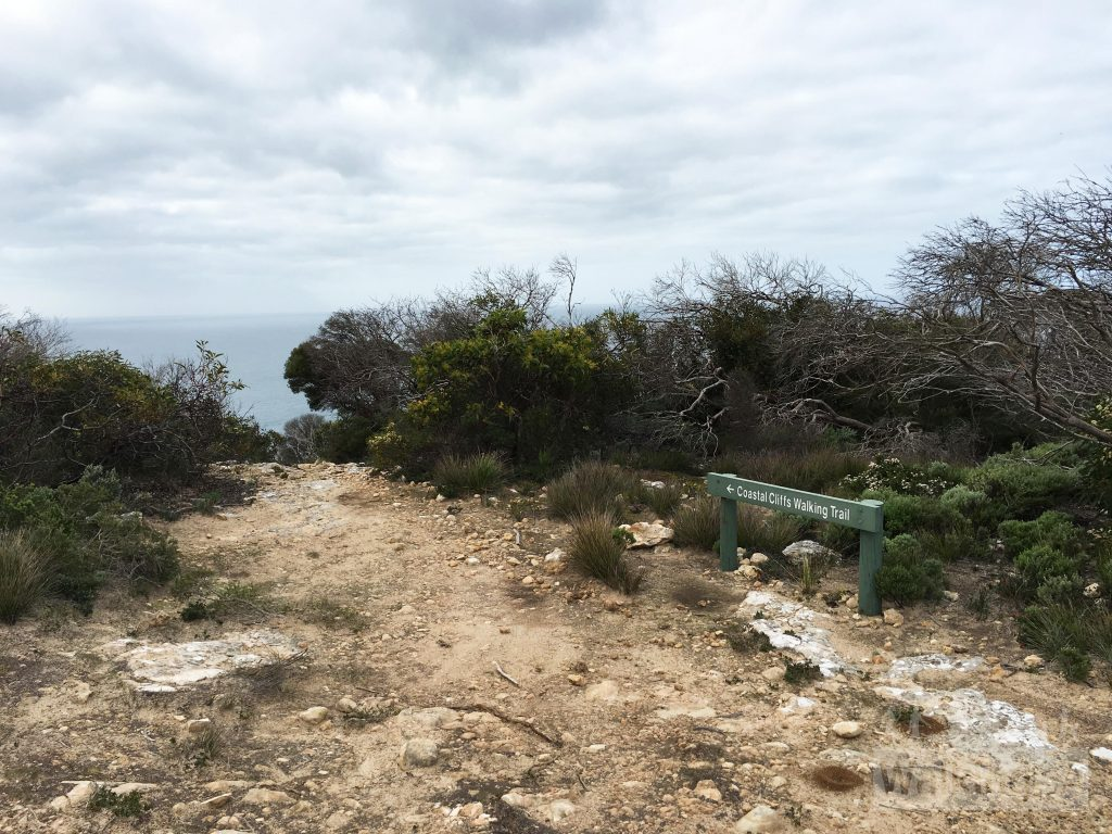 The Coastal Cliffs Walking Trail and Heysen Trail leaves the fire track to follow a walking trail along the cliffs
