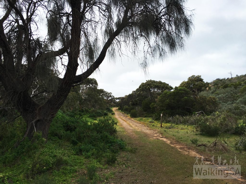 Walking along the Heysen Trail up to Ridgeway Hill