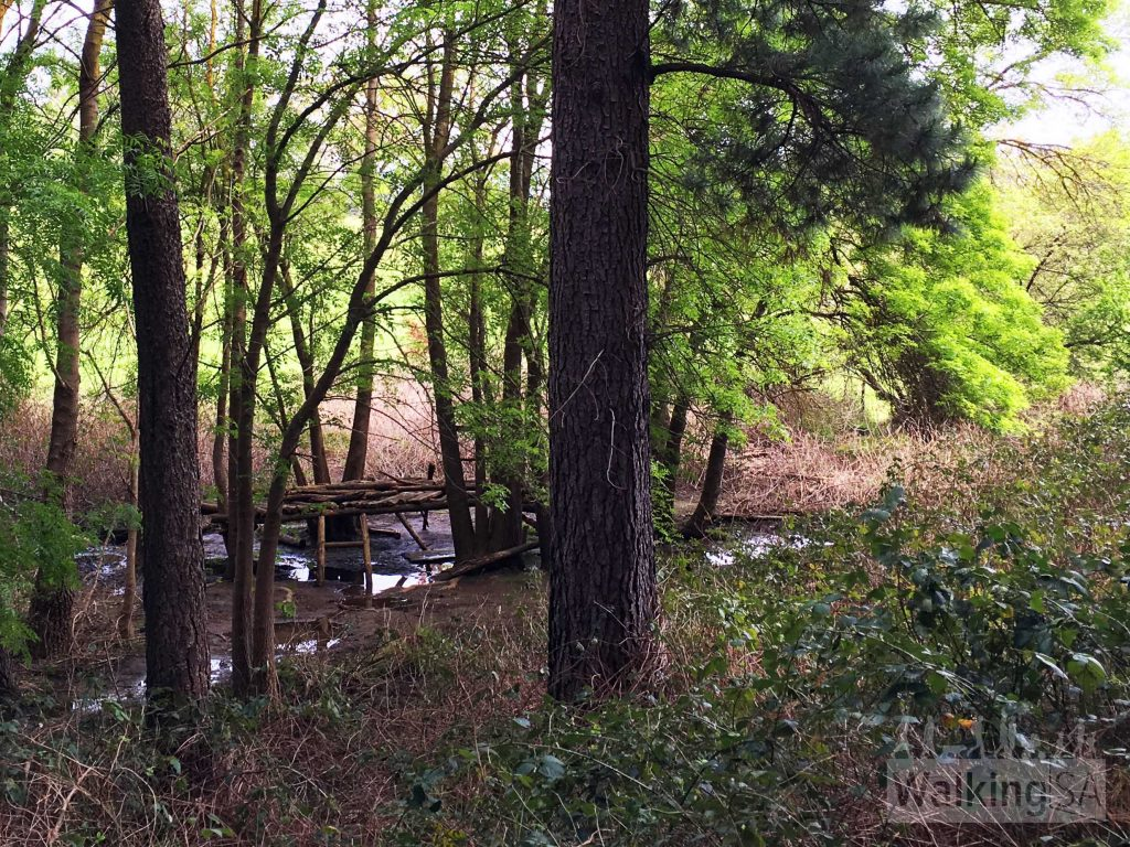 Build a fort in the creek in the pine forest