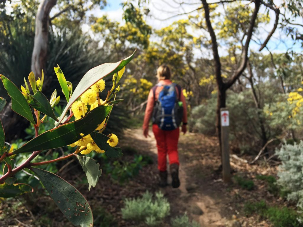 Flowering trees along the Heysen Trail hike to Kings Beach