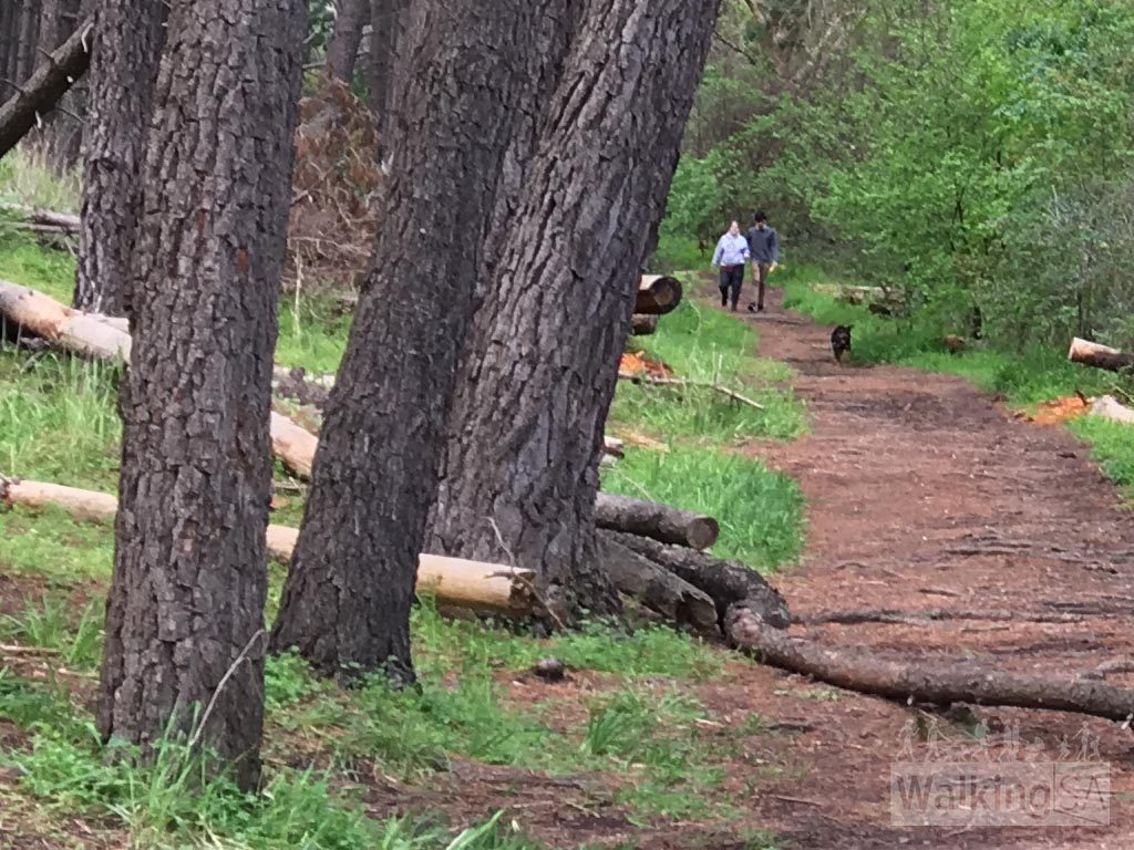 Forest trails in Blackwood Forest Recreation Park