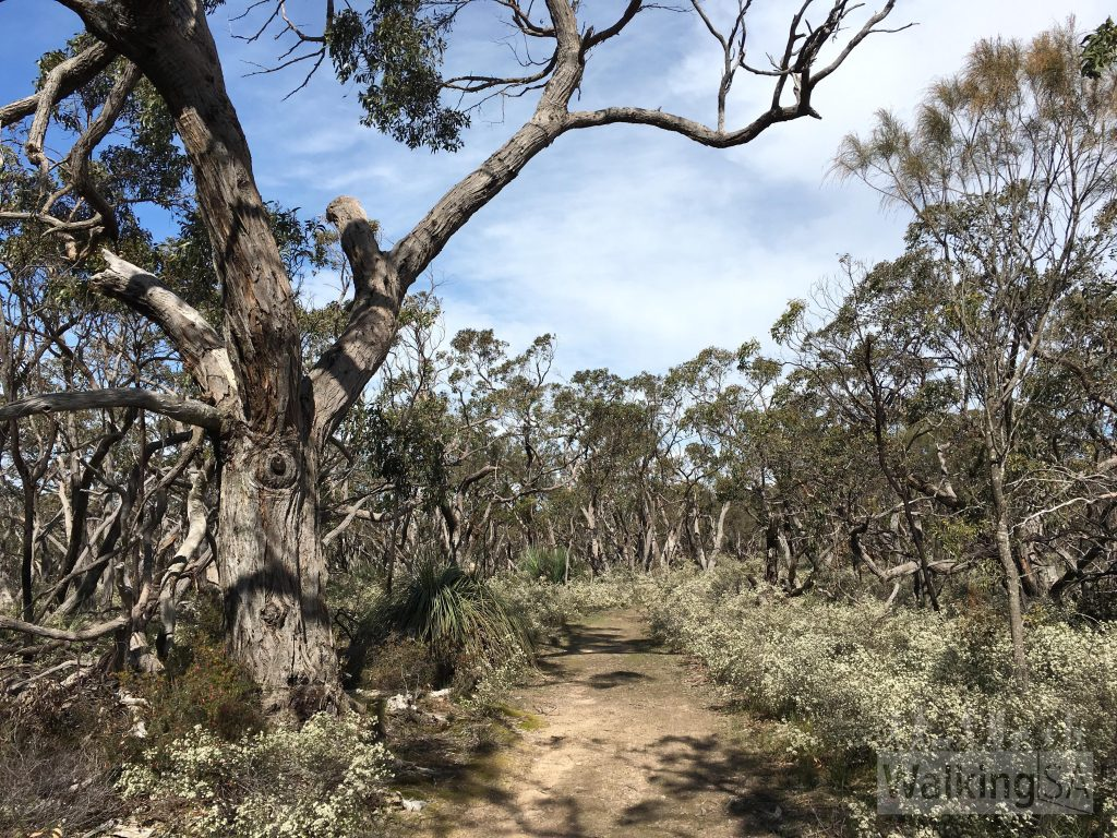 Heysen Trail through Kaiserstuhl Conservation Park